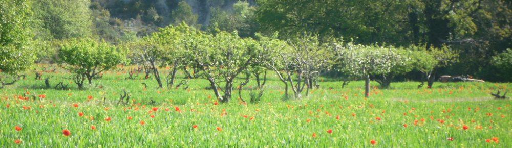 Cawthrays in Caupenne d'Armagnac